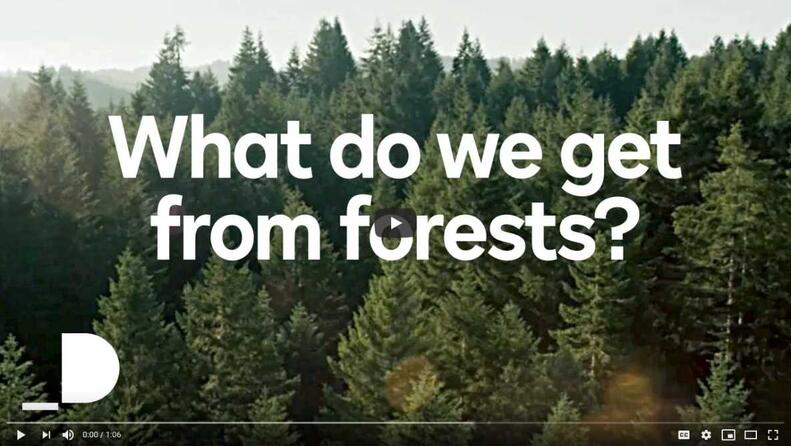 Forest Stewardship Council: What do we get from forests?