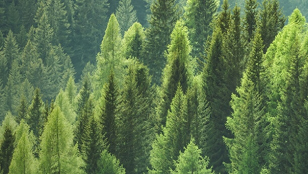 A forest of trees.