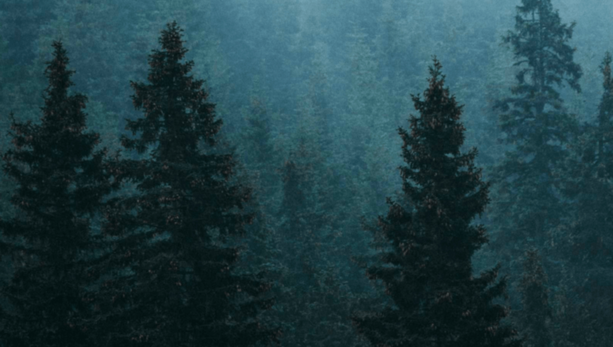 An aerial view of evergreen trees in a forest.