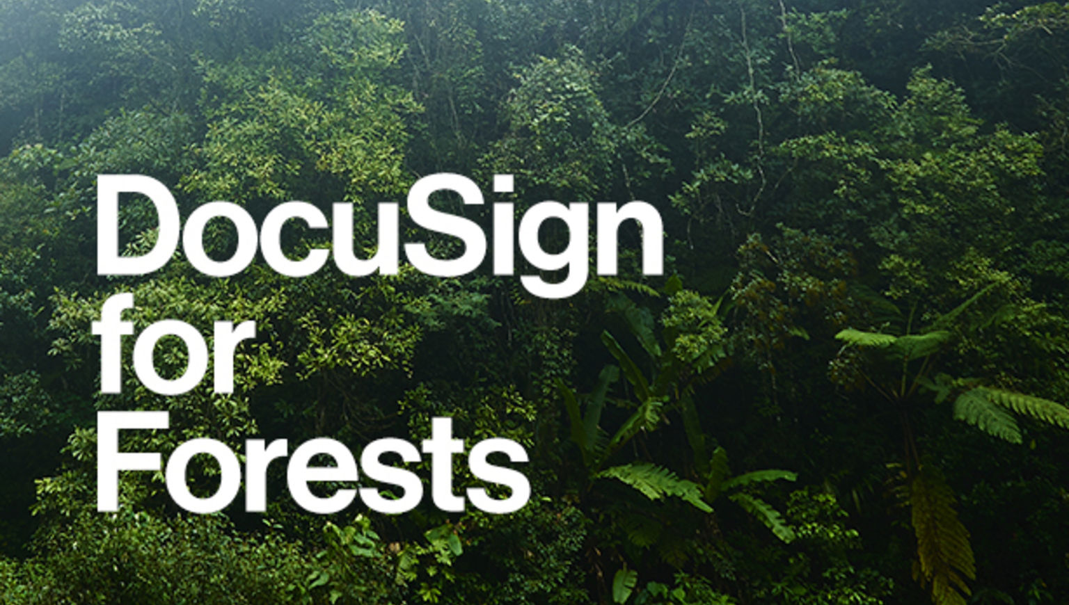 "A picture of trees with the words ""DocuSign for Forests"" in white on top."